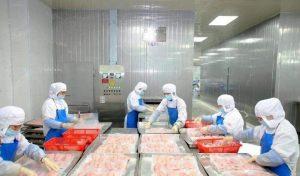 China Frozen Tilapia Export